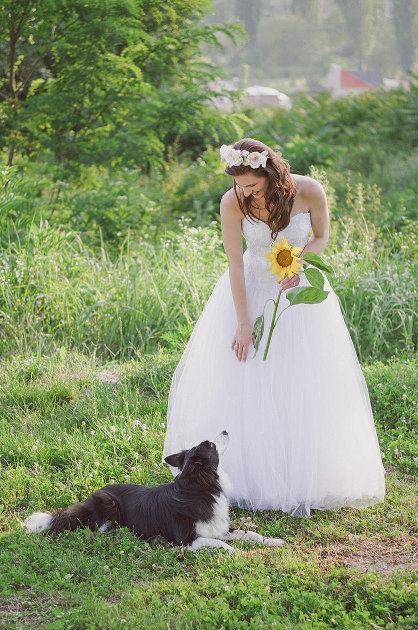 Haru és a menyasszony