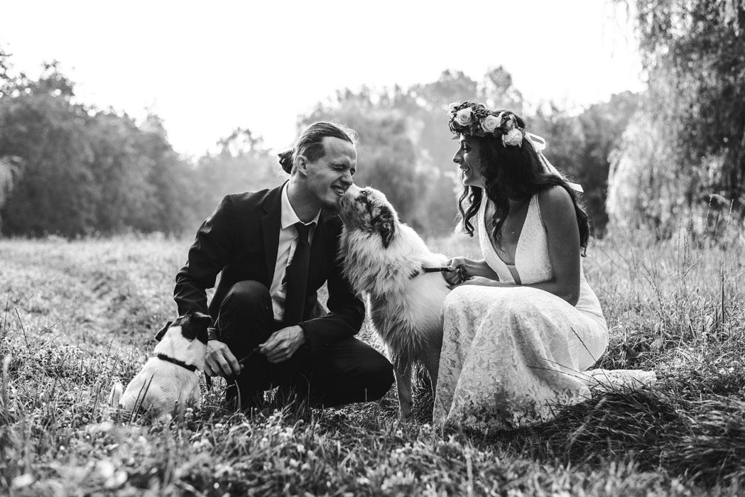 Haru esküvő fotózás border collie
