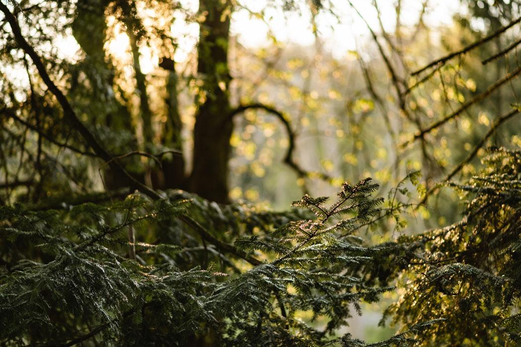 erdei fotózás